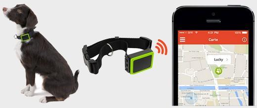 Collier connecté weenect pets pour géolocaliser son chien via un smartphone