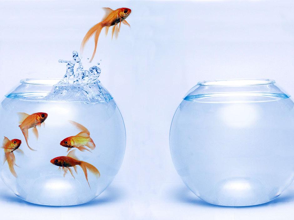 Un poisson saute d'un bocal à un autre comme on changerait d'opérateur Internet